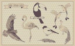 Les oiseaux dirigent l'ensemble Oiseau tiré par la main Conception de cru Photographie stock libre de droits