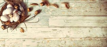 Les oiseaux eggs dans le nid sur le fond en bois rustique photographie stock