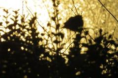 Les oiseaux et les silhouettes de buissons sur un coucher du soleil jaunissent le fond de lac Photo stock