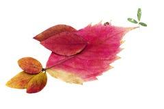 Les oiseaux faits main avec l'automne sèchent les feuilles pressées Images libres de droits