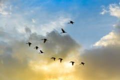 Les oiseaux jettent ont le produit de queue sur le ciel Image stock