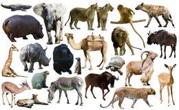 Les oiseaux, le mammifère et d'autres animaux de l'Afrique ont isolé photos libres de droits