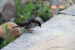 Les oiseaux mangent la libellule Photo stock