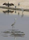 Les oiseaux marins assortis sur Dubai Creek Images libres de droits