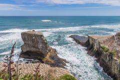 Les oiseaux marins d'emboîtement sur les roches en mer orageuse Image stock