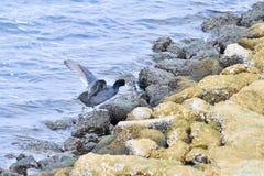 Les oiseaux marins légers Photographie stock libre de droits