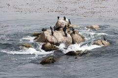 Les oiseaux marins se reposant sur des roches dans l'océan. Photographie stock libre de droits