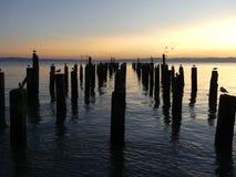Les oiseaux marins se reposant sur le quai delapidated au crépuscule Images libres de droits