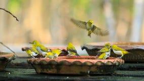 Les oiseaux mignons se baignent dans un petit pot Image stock