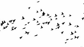 Les oiseaux noirs et blancs volent sans fin illustration stock