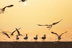 Les oiseaux rétro-éclairés apprécient une vue de coucher du soleil Photos stock