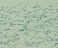 Les oiseaux s'assemblent, fond photographie stock