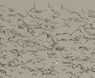 Les oiseaux s'assemblent, fond photo libre de droits