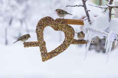 Les oiseaux sauvages aiment le concept créatif Image libre de droits