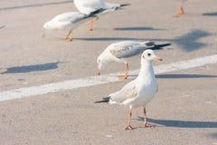 Les oiseaux se tiennent dessus sur le plancher en béton, fond, Photographie stock libre de droits