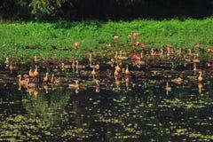 Les oiseaux sont dans le lac Images stock