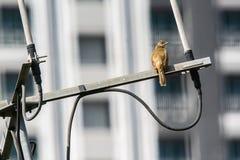 Les oiseaux sont sur l'antenne photographie stock libre de droits