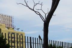 Les oiseaux sont sur la barrière Photos libres de droits