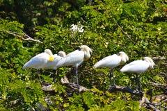 Les oiseaux synchronisés Images stock