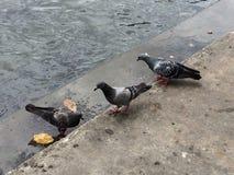 Les oiseaux trouvent des poissons Photographie stock libre de droits