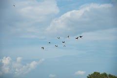 Les oiseaux volaient Images stock