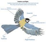Les oiseaux volent Photo libre de droits