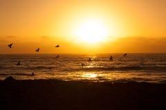 Les oiseaux volent au-dessus de la mer pendant le coucher du soleil Photographie stock