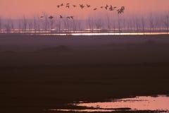 Les oiseaux volent au lever de soleil photographie stock libre de droits