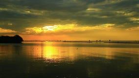 Les oiseaux volent au milieu de l'océan avec le soleil lumineux de matin banque de vidéos