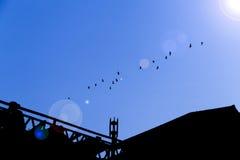 Les oiseaux volent en ciel bleu Photos libres de droits