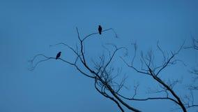Les oiseaux volent outre des branches