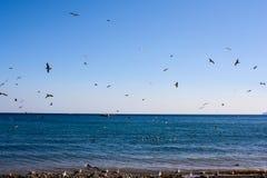 Les oiseaux volent par la mer images libres de droits