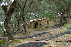 Les oliveraies s'approchent d'Arilas, Corfou, Grèce Image libre de droits