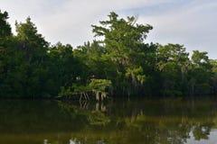 Les ombres ont moulé le long des voies d'eau peu profondes du bayou images stock