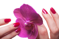 Les ongles manucurés caressent les pédales roses foncées de fleur photo stock