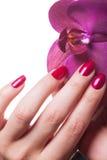 Les ongles manucurés caressent les pédales roses foncées de fleur photos libres de droits