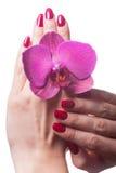 Les ongles manucurés caressent les pédales roses foncées de fleur images libres de droits