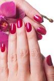 Les ongles manucurés ont peint un rouge-foncé photographie stock libre de droits