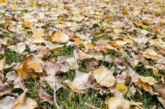 Les ordures de feuille d'automne dans le jardin ou le parc, tombent fond extérieur de nature avec les feuilles tombées colorées image libre de droits