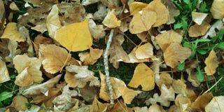 Les ordures de feuille d'automne dans le jardin ou le parc, tombent fond extérieur de nature avec les feuilles tombées colorées photos libres de droits