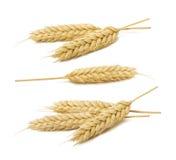 Les oreilles de blé ont placé la collection d'isolement sur le fond blanc photographie stock libre de droits