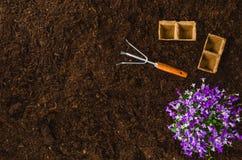 Les outils de jardinage sur le sol de jardin donnent à la vue une consistance rugueuse supérieure de fond Image libre de droits