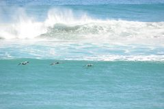 Les pélicans volent bas au-dessus des vagues de Boca Beach image libre de droits