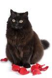 les pétales d'isolement mignons de chat noir se sont levés se reposant Images libres de droits