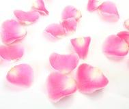 Les pétales d'un rose se sont levés Photographie stock libre de droits