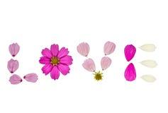 Les pétales de fleur de cosmos ont arrangé aux lettres d'amour sur le fond blanc Photo libre de droits