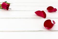 Les pétales de rose avec se sont levés Images libres de droits