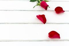 Les pétales de rose avec se sont levés Photo libre de droits