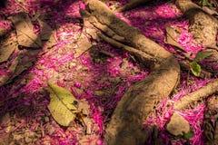 Les pétales roses photos libres de droits