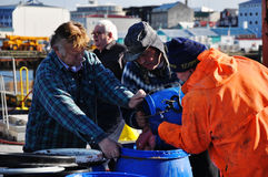 Les pêcheurs à Reykjavik hébergent, l'Islande image stock